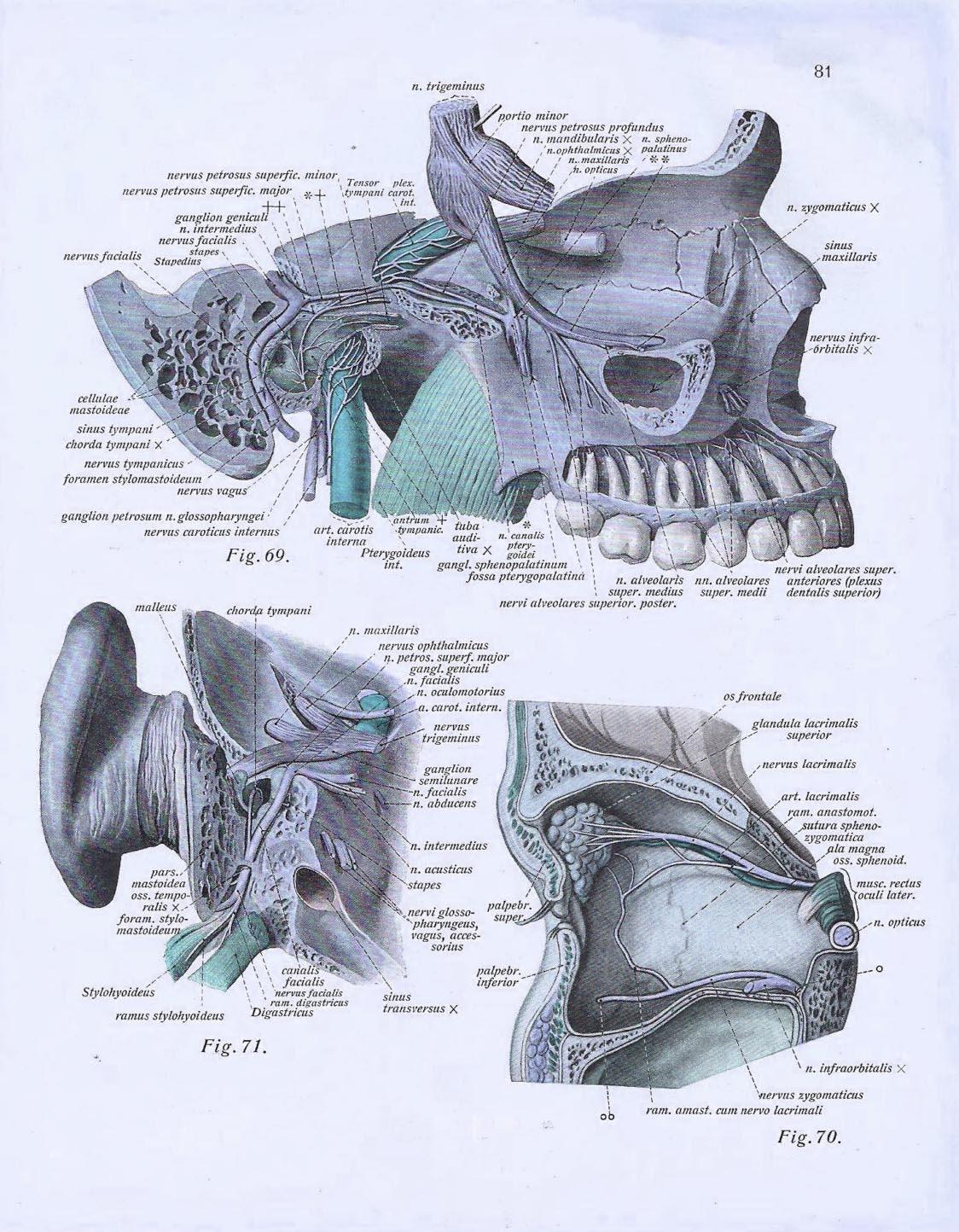 CranioSacral Therapie in Montreux